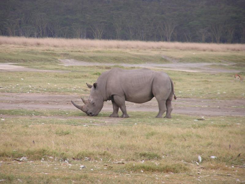 White Rhino2.