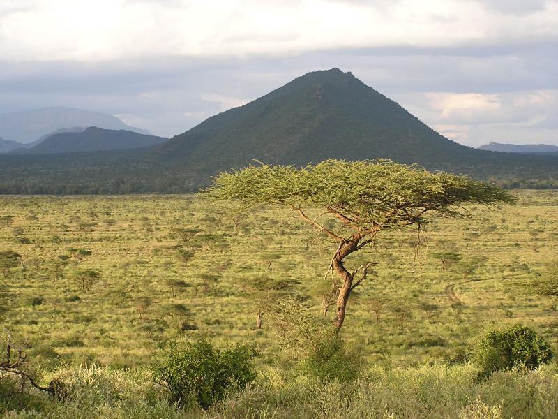 Acacia Tree against backdrop of Samburuland.JPG