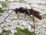 wasp-type-1.jpg
