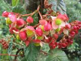 Flowers in Ecuador