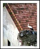 ds19980325_0038aVwF Stork Turkey.jpg