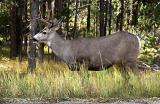 deer_elk__moose