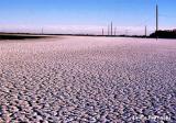 Crusty Salton Sea Sand