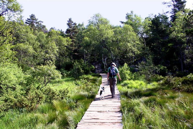 Trail deck