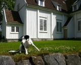 Joop's Dog Log - Saturday July 31