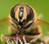 Macro - Bees