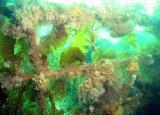 More kelp covered railings