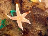 A lone starfish on the wreck
