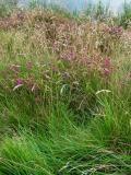 Grass and Heather