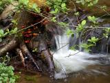 Fungus Falls