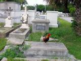 Why did the Chicken Cross The Grave