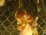 Dave feeding Cuscus.