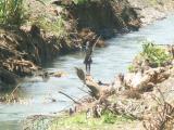 Little boy fishing on side of river