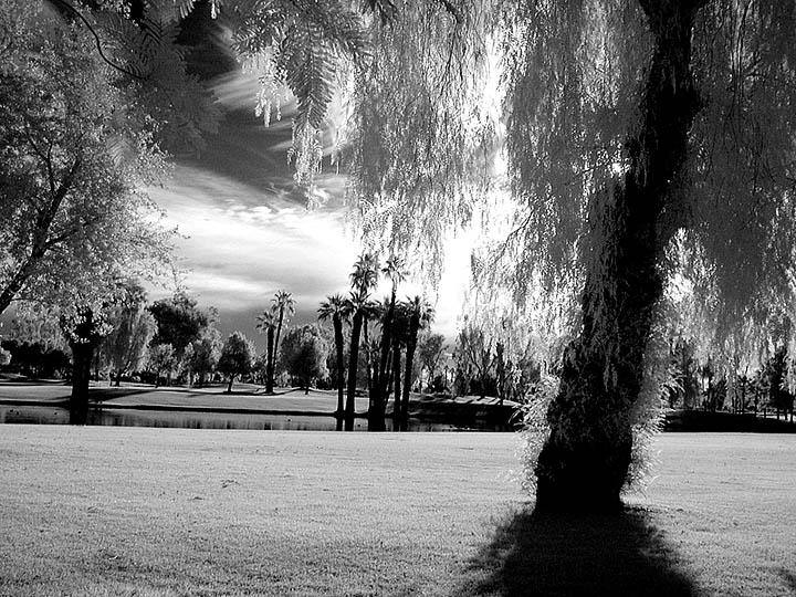 Palms (infrared)
