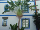 Palmtree at Puerto de Mogan