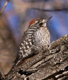 Big Morongo Preserve and Joshua Tree National Park