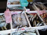 More fresh fish