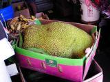 Humungous Jackfruit