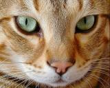 Green Eyes I