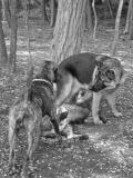 three_dogs.jpg