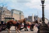 Horses at Dam Square