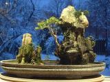 Bonsai and Winter Outside Surrounding