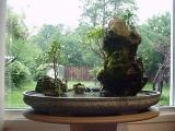 Bonsai and Spring Outside Surrounding