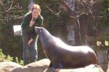 Seal feeding time at Central Park