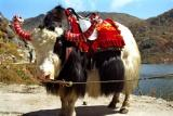 Another yak.jpg