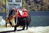 yak ride at Tsomgu Lake.jpg