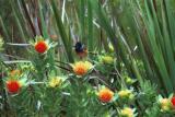 colibri in botanical garden.jpg