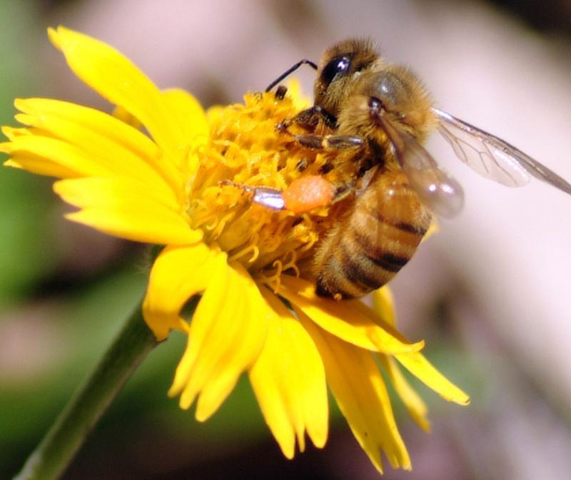 bee.on yellow flower