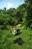 Papyrus swamp in Kibale