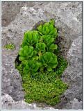 Cape Zanpa Coastal Flora