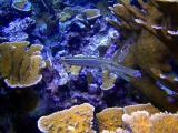 10 meter reef 272a