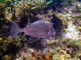 10 meter reef  290a