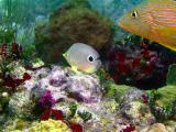 10 meter reef 309a