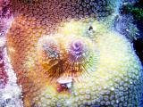10 meter reef 358a