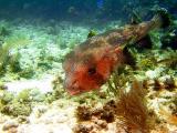 10 meter reef 088a