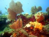 Corals backyard
