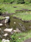Meadow Tarn