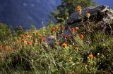 Wildflowers in Bloom (Slide)