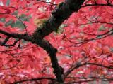 Seattle - Japanese Gardens/Washington Park Arboretum
