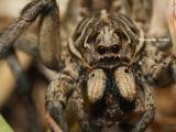 Kylie the spider
