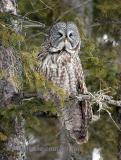 I am NOT a happy owl.