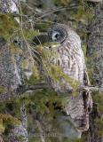 Oh, oh.  I see another of those owl photographers coming.  Think quick.