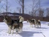 Broc, Tasha, Ice & Tipsy sledding in NH