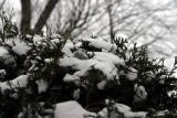 Frozen bubble on evergreen.jpg