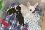 Breeze and her babies--Jan. 04'