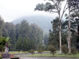 Botanical Gardens, Candikuning